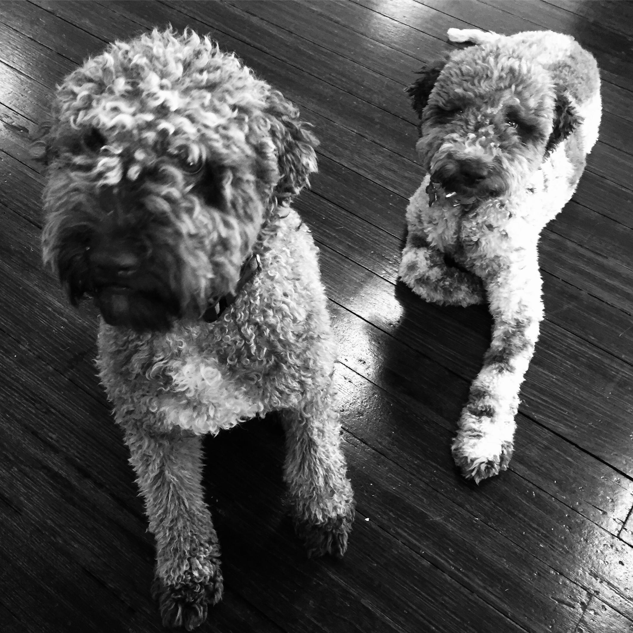 Miss Watson & Truffle
