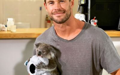 IMPACT's adopted Koala 'Dimples' goes wild